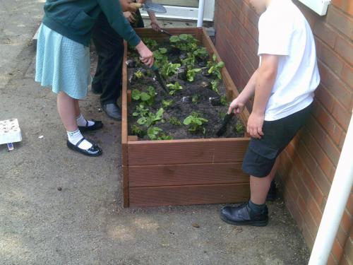 Planter Box for Littlehampton Primary School