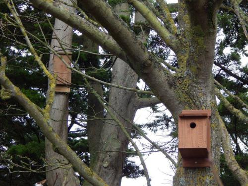Community Bird Boxes in Mewsbrook Park